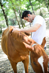 handsome young veterinary ausculting horse with stethoscope