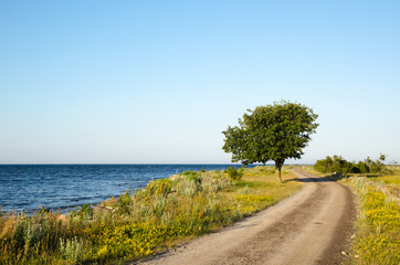 Winding gravel road with lone tree at the coast