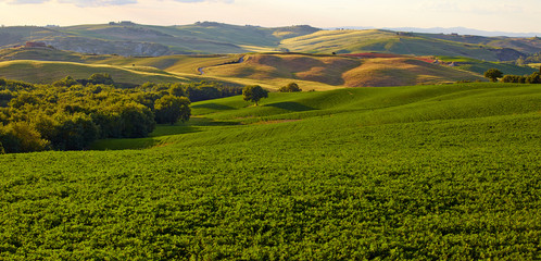Panoramic view of  hills of Tuscany Italy in San Quirico d'Orcia