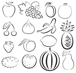 sketch of different fruits