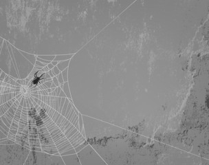 spider web on concrete wall