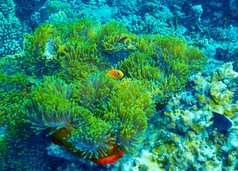 Coral reef underwater background