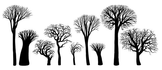 Силуэты деревьев без листьев