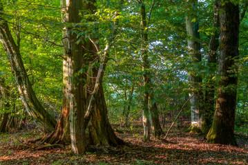 Bavarian Summer Forrest