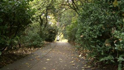 Chaumont park. Autumn. alley.