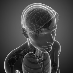 Male xray brain anatomy artwork