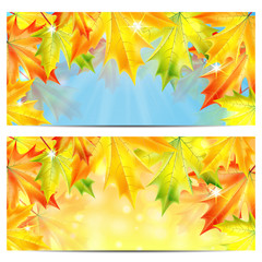 Set of autumn backgrounds with yellow and orange maple leaves