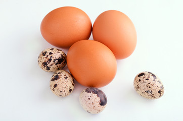 quail and brown eggs on the light background