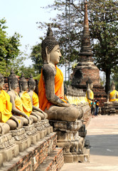many statues of Buddhas
