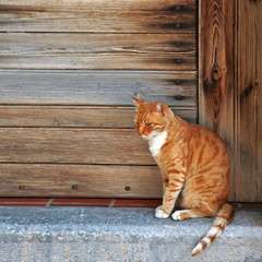 red cat  in wood doorway, Greece