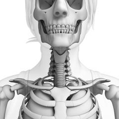 Throat artwork