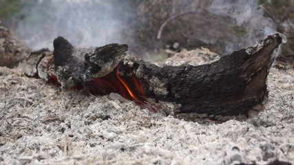 Burning Stump