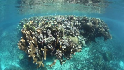 Coral Reef in Shallow Water