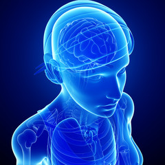 Female xray brain anatomy artwork