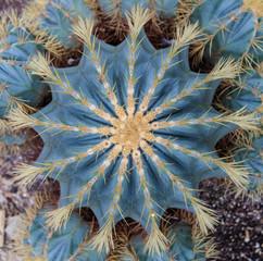 Extreme closeup of cactus