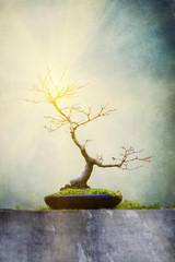 Bare bonsai tree with flare