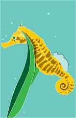 Seahorse Color