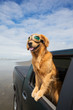 dog out the window of a car at the beach - 67973915