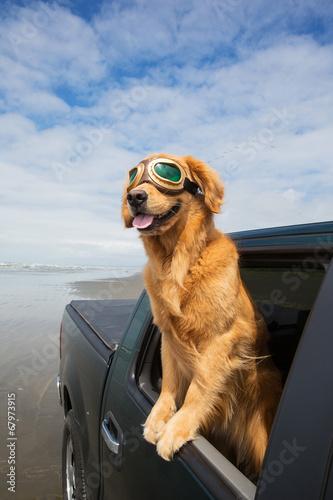 Leinwanddruck Bild dog out the window of a car at the beach