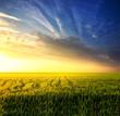 Field during sunset. Agricultural landscape