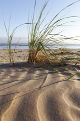 Dune grass.
