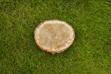 tree stump on the grass, top view