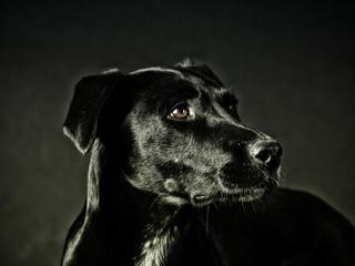 black dog (73)