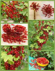 Set with red currant