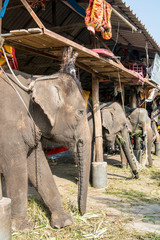 Elephant stable in Ayuthaya, Thailand