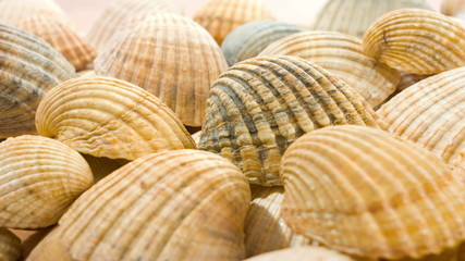 seashells, sea shells background