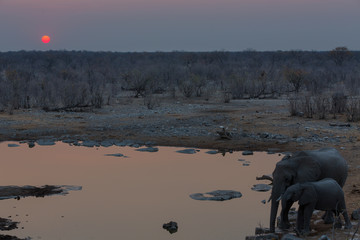 Elephants drinking water at sunset