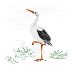 Stork white wild water bird vector illustration