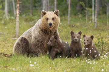 Famiglia orsi