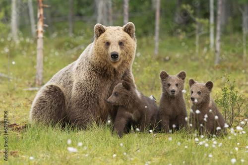 Fotobehang Dragen Famiglia orsi