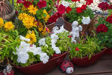 Sommerblumen auf der Terrasse
