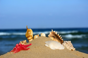 seashells and starfish in the sand on the sea background