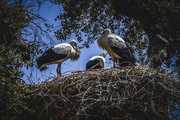 storks nest on a summer afternoon