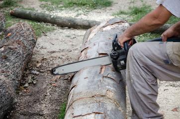 Blade of a Chainsaw cutting wood
