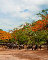 Scenery with flame trees at the Tiger Temple in Thailand