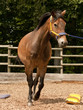 Pferd - 68004164