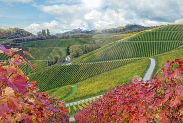 Durbacher Weinberge im Herbst