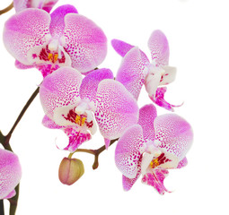 orchid branch close up