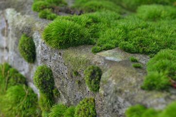 Green moss on stone
