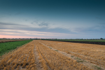 stubble field at sunset