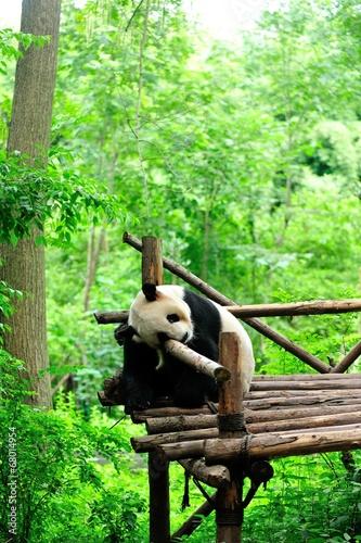 Foto op Aluminium Panda giant panda at forest
