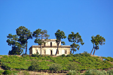 Old farmhouse and pines