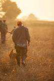 Hunter and his dog walking on field during quail hunt