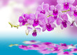 canvas print picture - Orchids and reflection