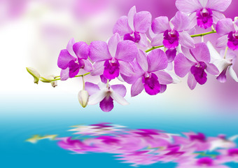 Orchids and reflection
