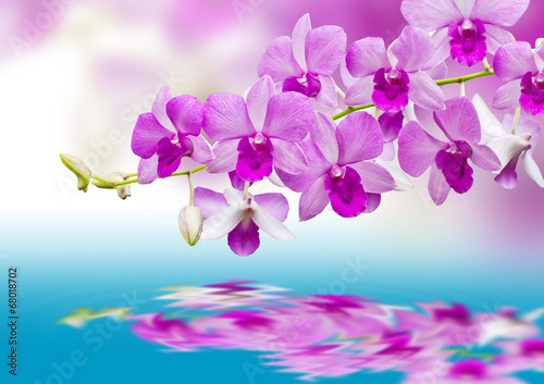 canvas print picture Orchids and reflection